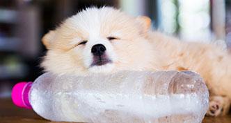 Dog resting on water bottle