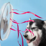 Stay Cool for Less This Summer with These Tips